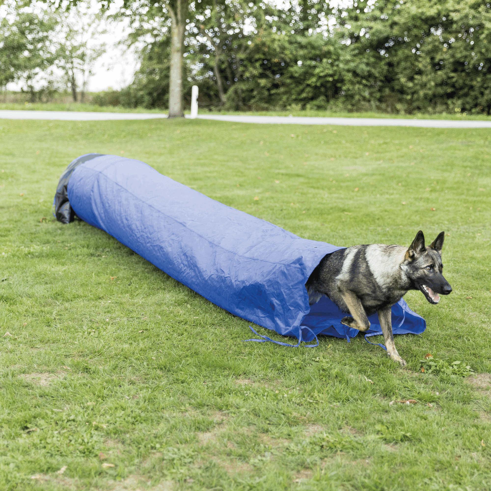Trixie Dog Activity Agility Sacktunnel ø 60cm / 5 m, blau
