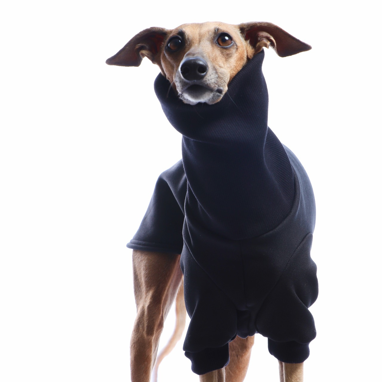 DG DogGear Basic Winter Sweatshirt - L1 - Schwarz