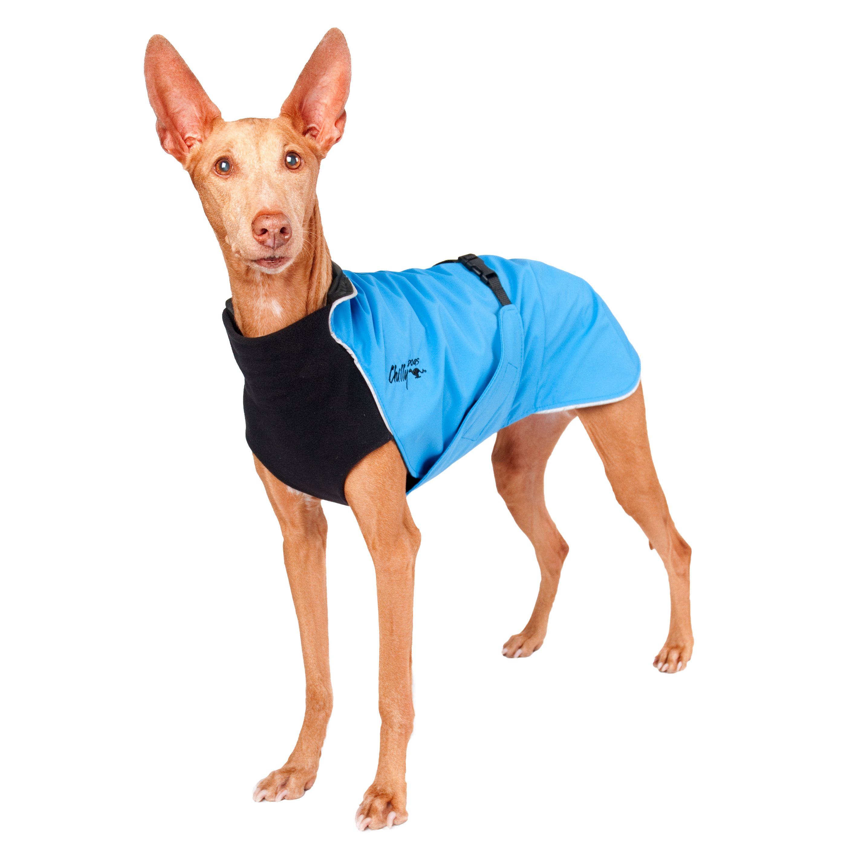 Chilly Dogs Harbour Slicker STANDARD