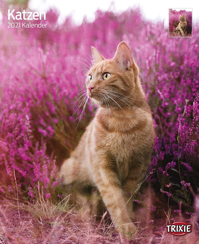 Trixie Kalender 2022 Katzen