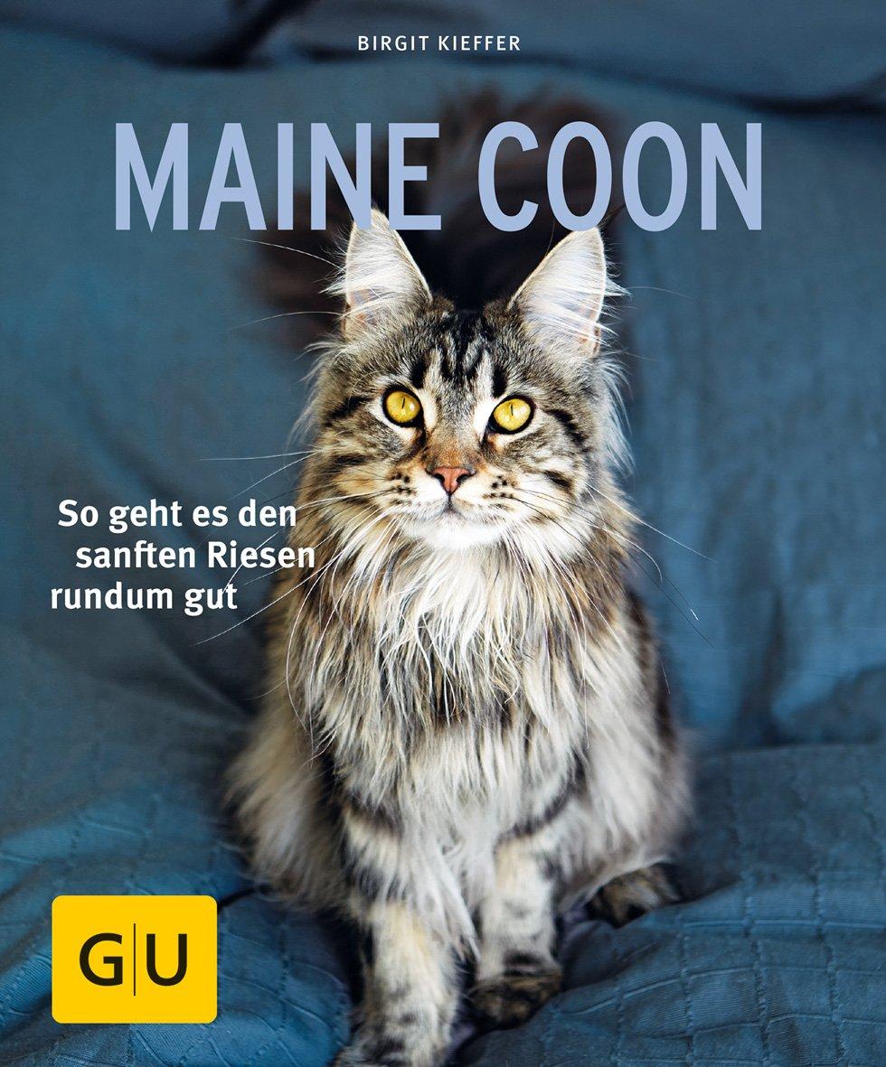 GU - Maine Coon [Birgit Kieffer]
