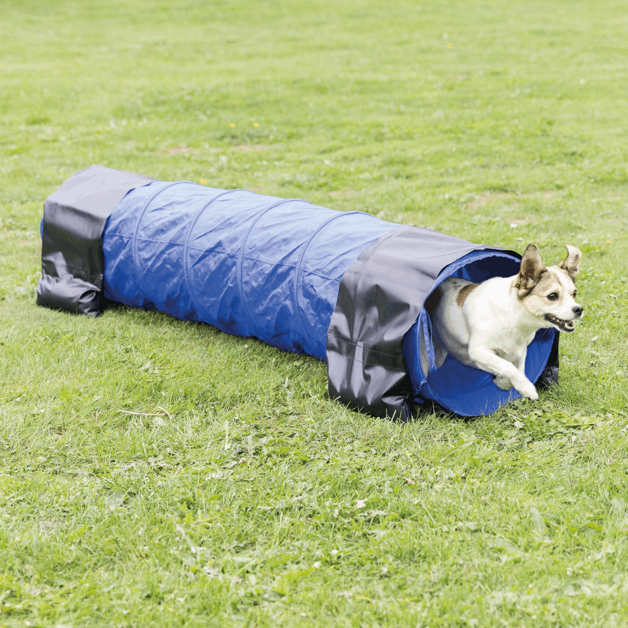 Trixie Dog Activity Agility Tunnel ø 40cm / 2 m, blau