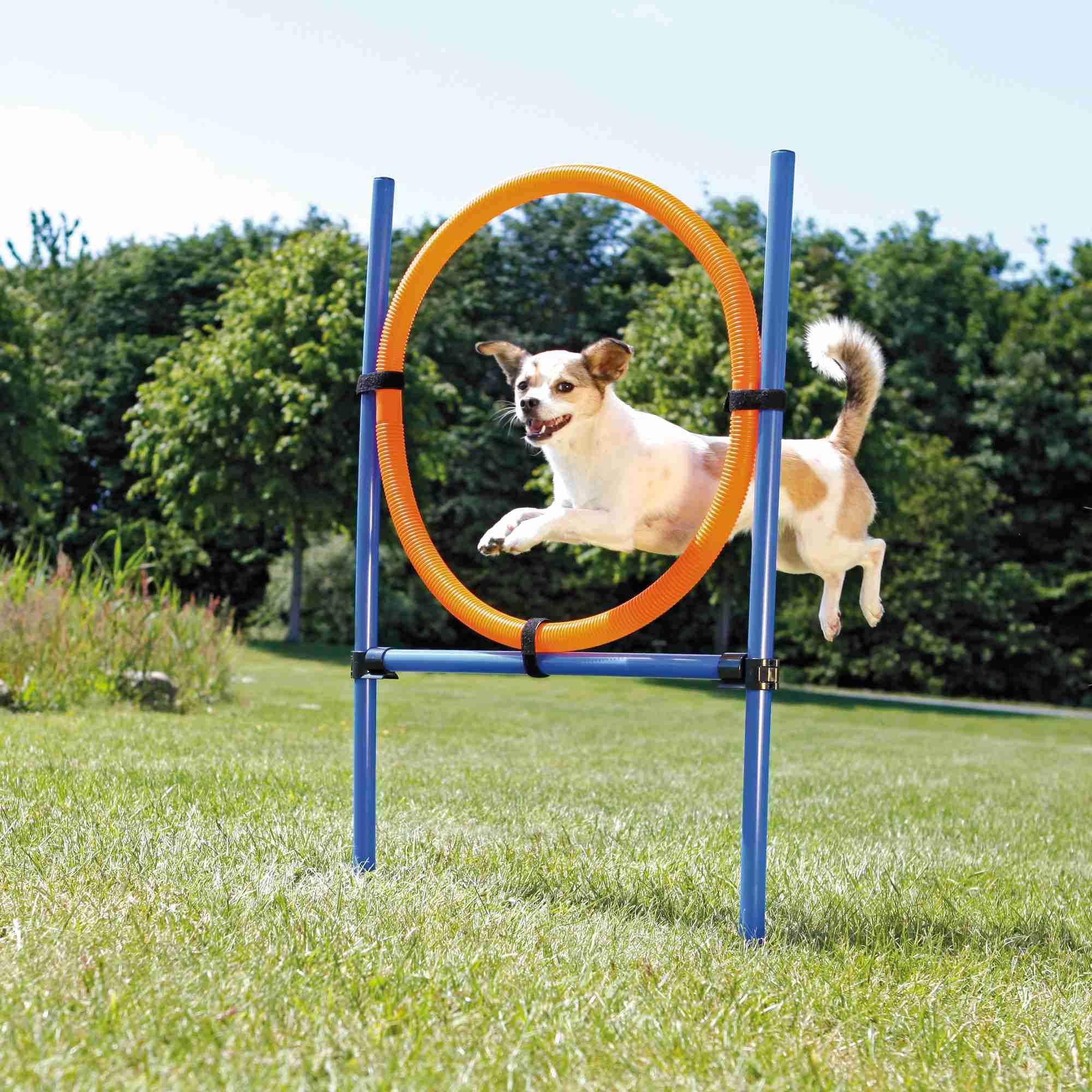 Trixie Dog Activity Agility Ring, Kunststoff 115 × ø 3cm, ø 65cm, blau/orange