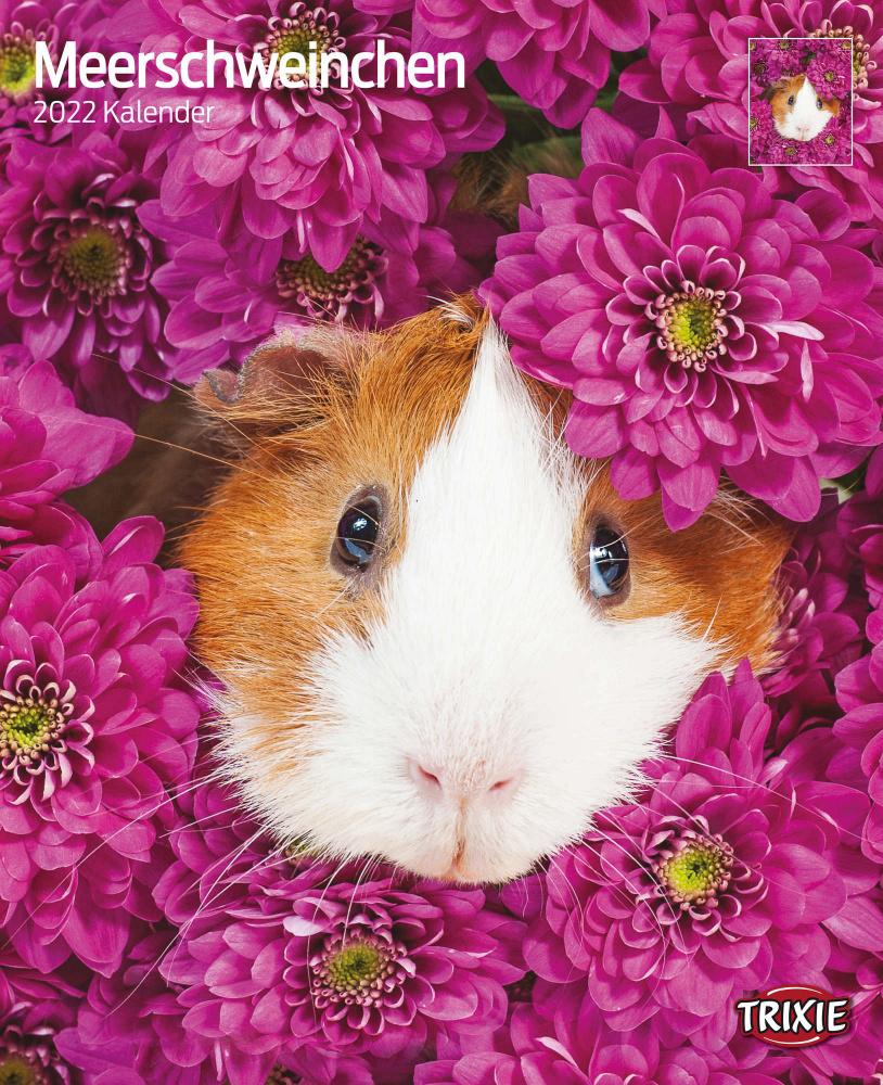 Trixie Kalender 2022 Meerschwein